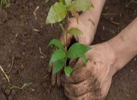 Grupo ambientalista hará una reforestación