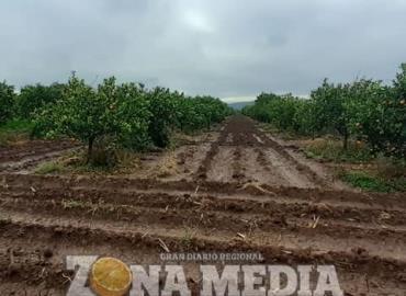 Lluvias benefician al sector agrícola