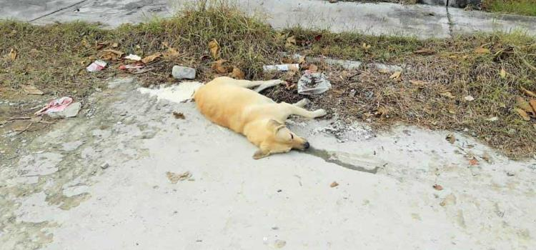 Envenenan mascotas en fracc. El Consuelo