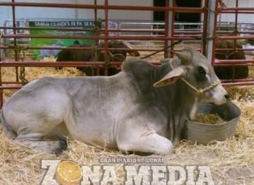 Productores deben registrar el ganado