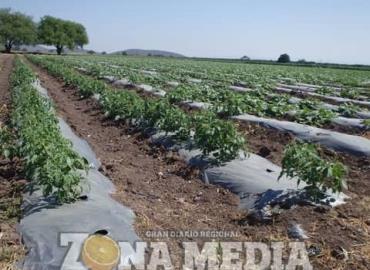 Hay 1,200 hectáreas de tierras de cultivo
