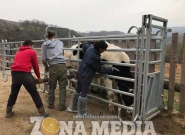 Deben vacunar ganado para prevenir la rabia