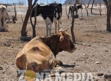 Ganaderos temen sequía en este año