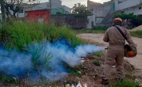 Intensifican fumigaciones