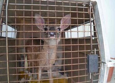 Incrementa el tráfico de fauna