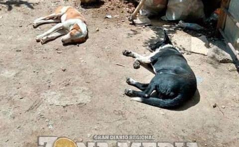 Envenenan perros y gatos en ejido