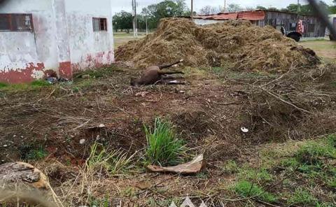 Dejaron un equino en descomposición