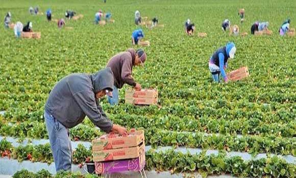 Regresarán jornaleros agrícolas por heladas