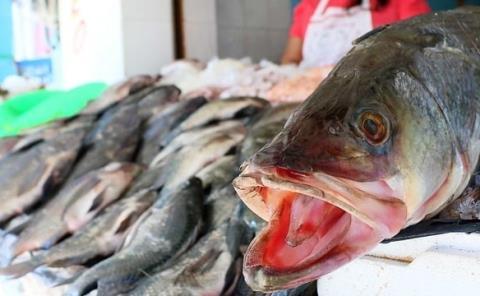 Cuaresma eleva venta de pescado