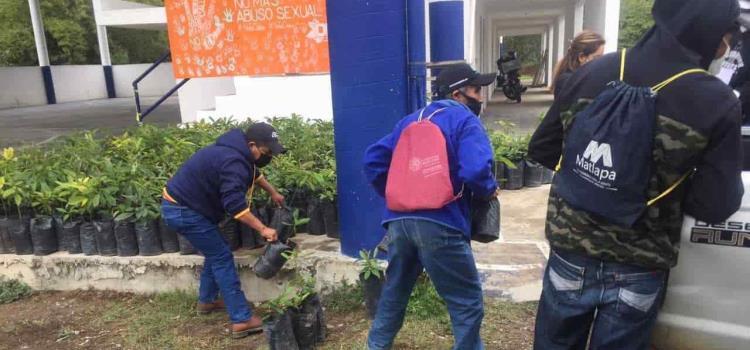 800 plantas de aguacate entregará Desarrollo Rural