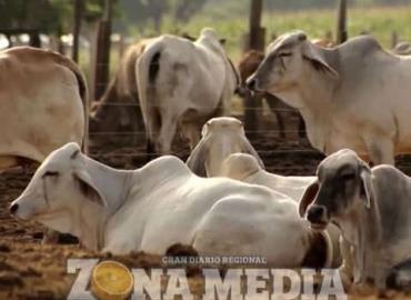 Vacunar el ganado evita enfermedades