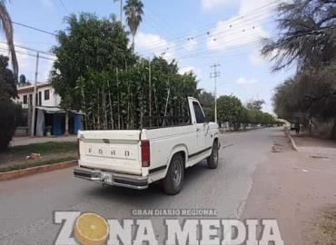 Comercializan diversas plantas