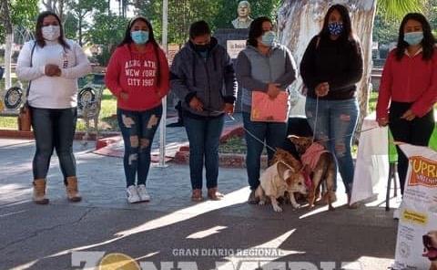 Adoptar mascotas piden asociaciones