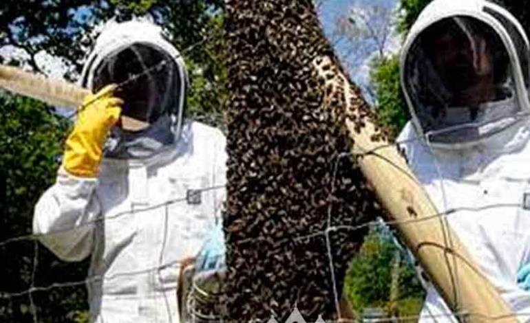 Exhorta a tener cuidado con enjambres de abejas