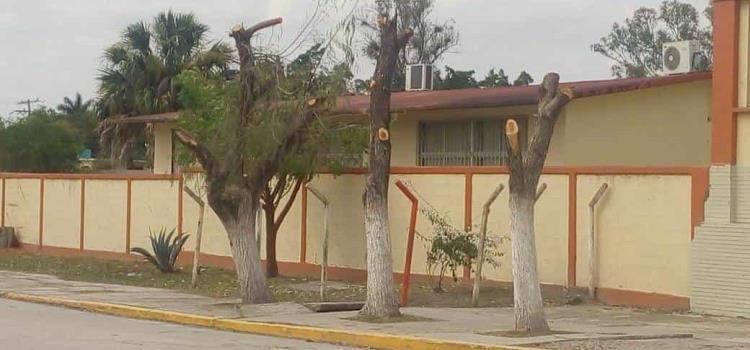 Atentan contra árboles de tule