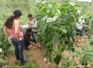 Cambian cítricos y maíz por hortalizas