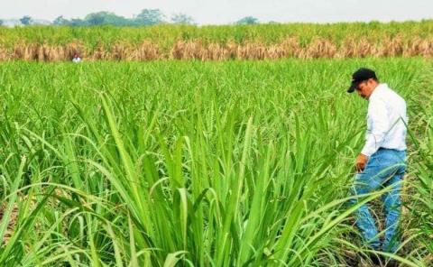 Urgente intercalar cultivos en la zona