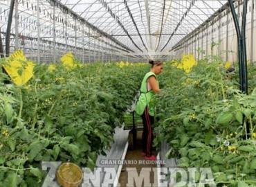 Agricultura protegida genera más beneficios