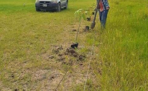 Más gente se une a la reforestación