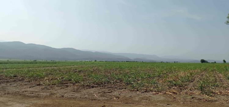 Nuevos cultivos requieren lluvias