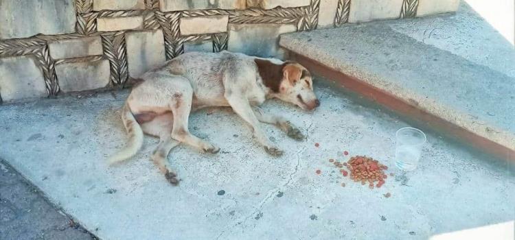 Alimento y agua a perros de la calle