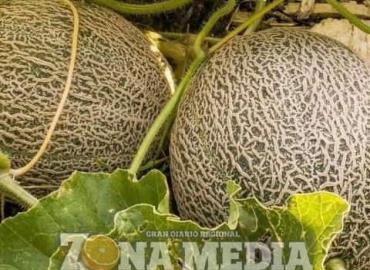 Gran variedad de cultivos hay