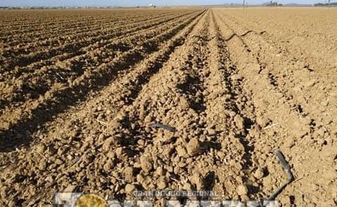 Abandonan tierras por cambio climático