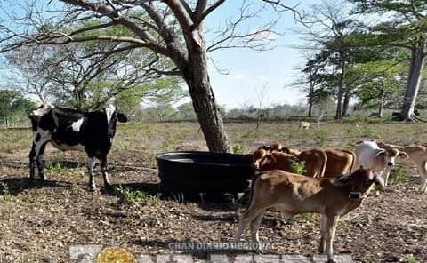 Desesperación en el sector agrícola