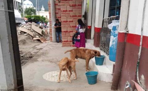 Piden dar agua a callejeritos