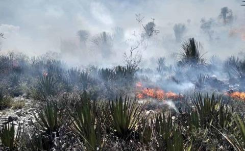 Basureros clandestinos provocan los incendios