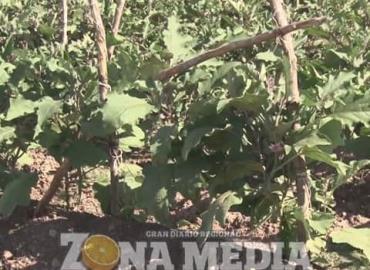 Productores afectados por robo de cosechas