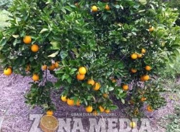"""Baja prevalencia en la """"Mosca de la fruta"""