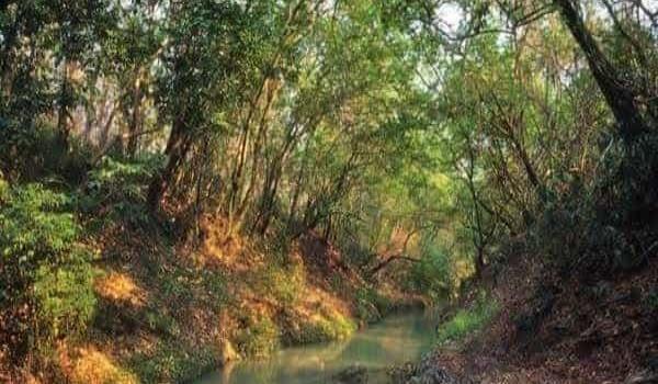 Llenan represas en sierra de Tanchipa