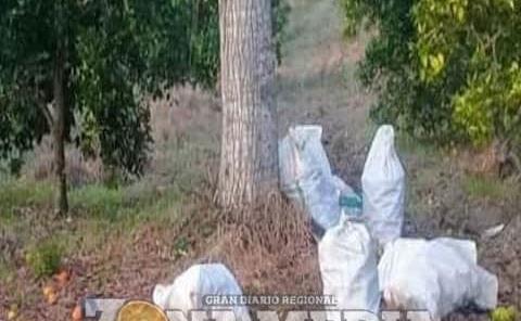 Ladrones atracan parcelas de cítricos