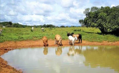 Confían ganaderos en captar agua de lluvia