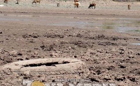 Ya no hay agua para el ganado