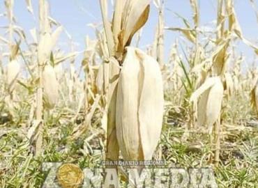 Crisis en el agro y la ganadería por sequía