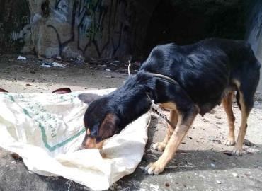 Incrementan casos de maltrato animal