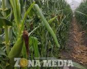 Agricultores dañan el acuífero subterráneo