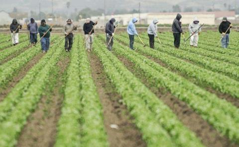 Mexicanos engañados por red de trata laboral