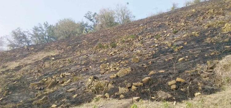 Seis hectáreas incendiadas