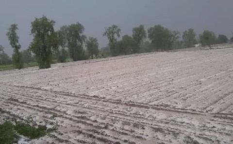 Ante granizada se perderán cosecha de verduras y leguminosas