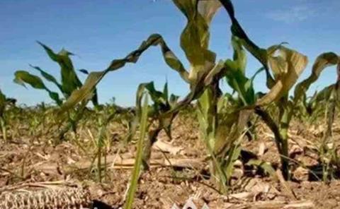 Sequía un peligro para los agrícolas