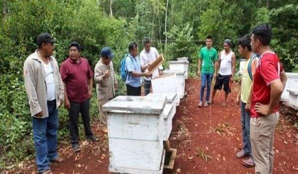 Crisis en la apicultura