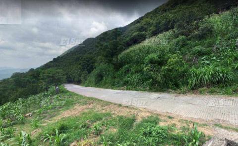 Avistamiento de pumas y tigrillos en carretera