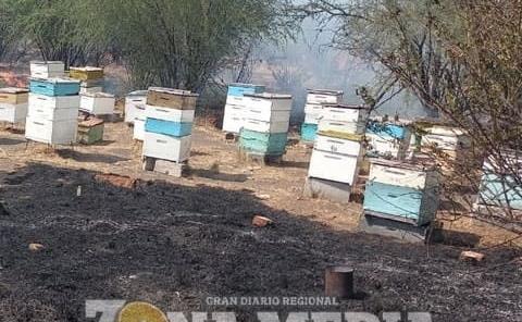Incendio de pastizales afectó cajas con abejas
