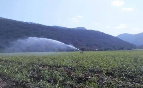 Reanudan tandeo del riego agrícola