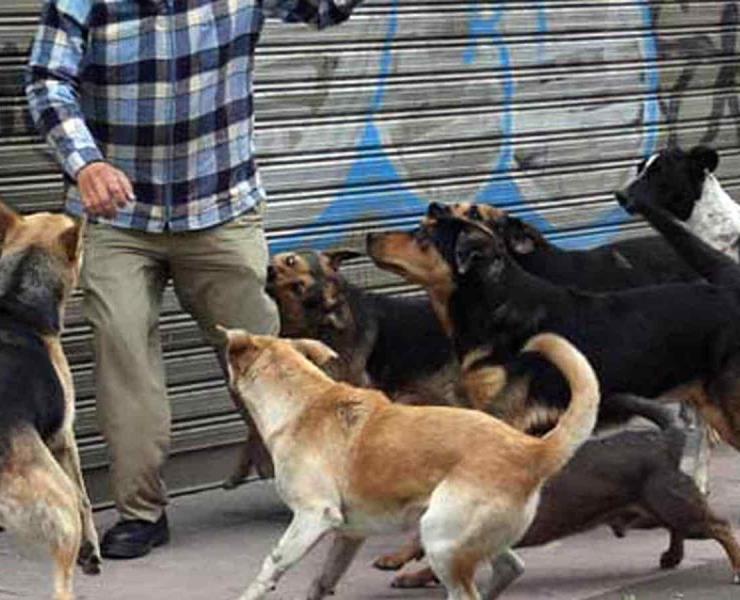 Multarán a dueños de perros