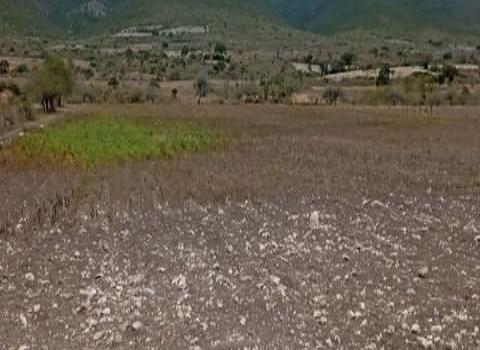 Graves daños por la sequía