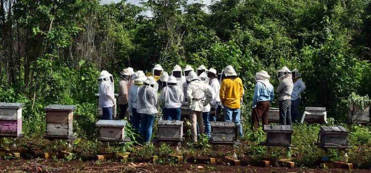 Capacitan a apicultores
